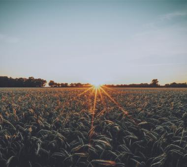 Sectores especializacion agropecuario agroindustrial Bodero asociados